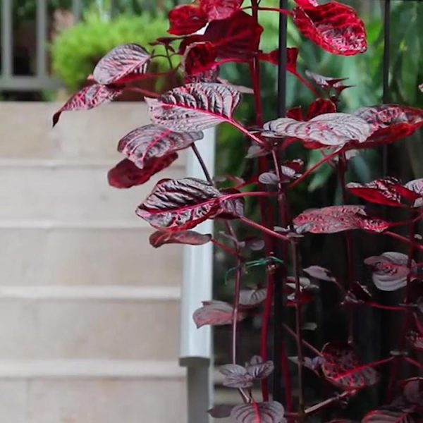 apartment garden design Sydney | Scenic Blue Design